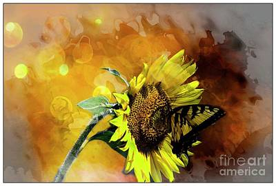 Photograph - Tetured Sunflower by Geraldine DeBoer
