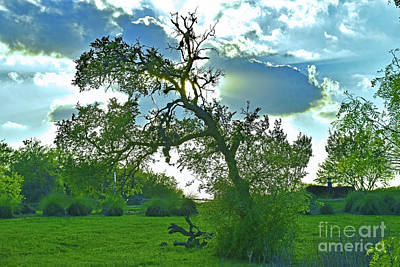 Photograph - Texas Beauty - Buda Tx - Cullen Country by Ray Shrewsberry