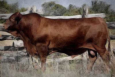 Painting - Texas Beefmaster Bull  by Michele Carter