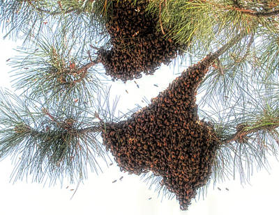 Photograph - Texas Bees ? by Donna Kennedy