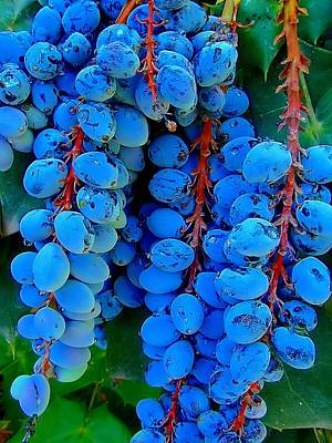 Photograph - Texas Berries by Beth Akerman