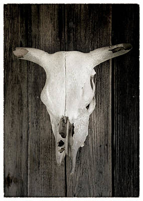 Bevo Art Photograph - Texas Bleached Steer Skull by Stephen Stookey