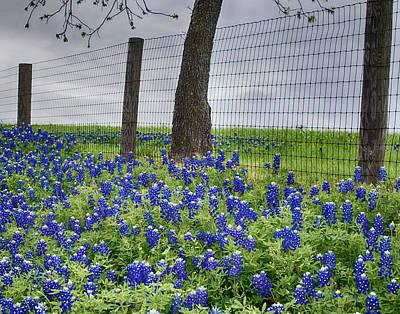 Photograph - Texas Bluebonnets V7 by Rospotte Photography