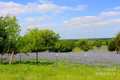 Photograph - Texas Bluebonnet Field by Kathy White