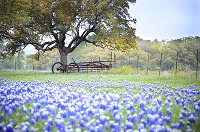 Photograph - Texas Bluebonnet Morning by Debbie Karnes