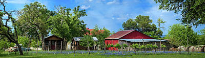 Photograph - Texas Bluebonnet Vineyard Panorma by Lynn Bauer