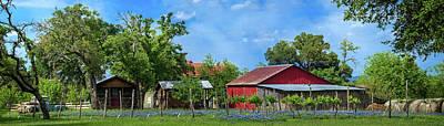 Photograph - Texas Bluebonnet Vineyard Panorma by Lynn Bauer