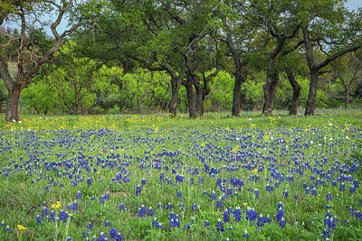 Photograph - Texas Bluebonnet Wildflowers by Steven Bateson