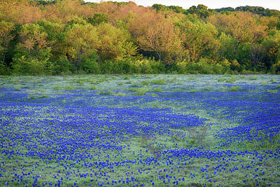 Photograph - Texas Bluebonnets 041618 by Rospotte Photography