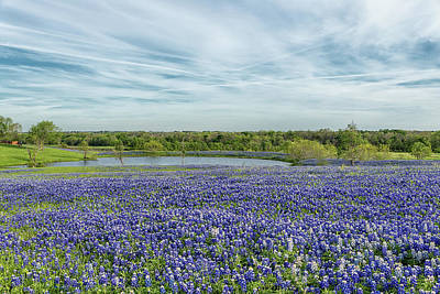 Photograph - Texas Bluebonnets 13 by Victor Culpepper