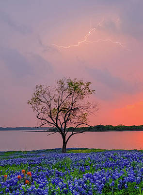 Robert Bellomy Royalty-Free and Rights-Managed Images - Texas Bluebonnets and Lightning by Robert Bellomy