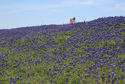 Photograph - Texas Bluebonnets by Donna Kennedy