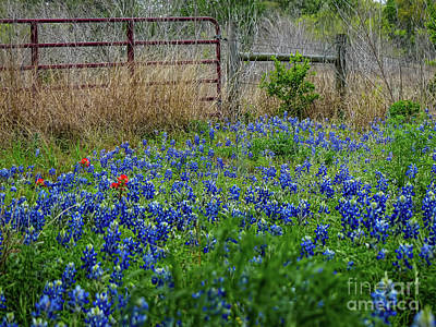 Digital Art - Texas Bluebonnets by Elijah Knight