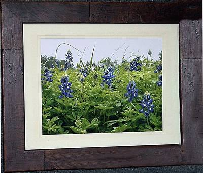 Digital Art - Texas Bluebonnets by Ellen Barron O'Reilly