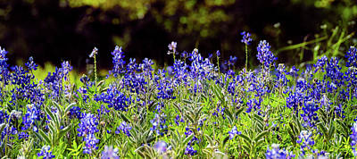 Photograph - Texas Bluebonnets IIi by Greg Reed