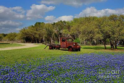 Photograph - Texas Bluebonnets by Janette Boyd