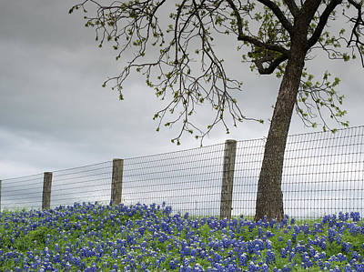 Photograph - Texas Bluebonnets V2 041315 by Rospotte Photography