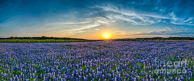Most Sold Photograph - Texas Bluebonnets Sunset Pano by Tod and Cynthia Grubbs