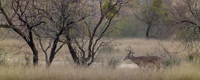 Photograph - Texas Buck by Ryan Heffron