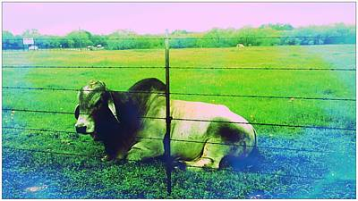 Photograph - Texas Cattle Verde by Marisela Mungia