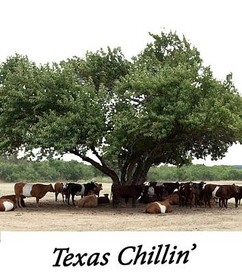 Photograph - Texas Chillin T Shirt by Rospotte Photography