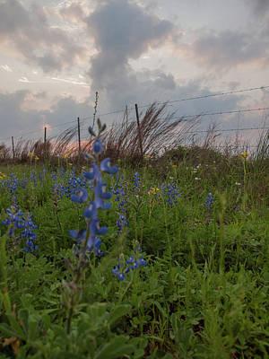 Photograph - Texas Coastal Prairie Wildflower Sunset by Joshua House