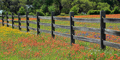 Texas Fence And Wildflowers - Painterly Art Print