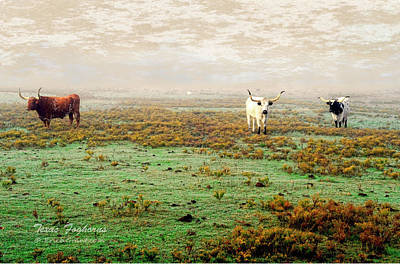 Photograph - Texas Foghorns by Erich Grant