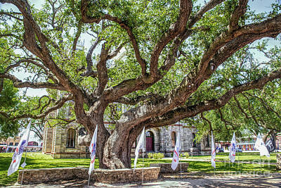 Photograph - Texas Hanging Tree by Lynn Sprowl