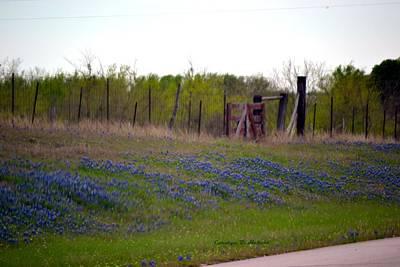 Wall Art - Photograph - Texas Highway Bluebonnets by Carolyn Hebert