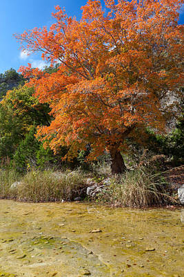 Lost Maples Autumn Art Print by Mike Brymer