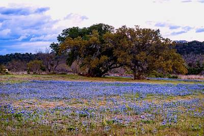 Photograph - Texas Hill Country Bluebonnets  by L O C