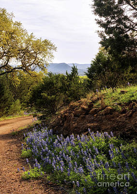 Photograph - Texas Hill Country by Cathy Alba