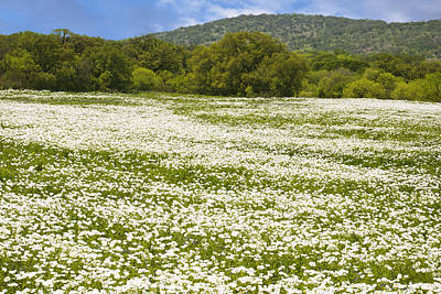Texas Hill Country Spring 2 Print by Paul Huchton