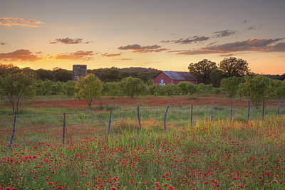 Texas Hill Country Wildflowers At Sunset 3 Art Print