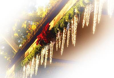Photograph - Texas Icicles by Nadalyn Larsen