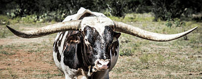 Longhorns Photograph - Texas Longhorn by Andy Crawford