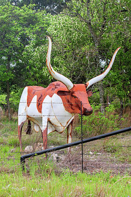 Photograph - Texas Longhorn by Art Block Collections