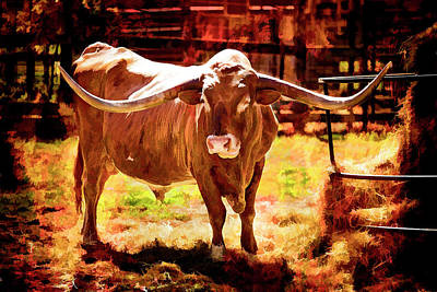 Photograph - Texas Longhorn Cattle 5314.01 by M K  Miller