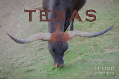 Cattle Mixed Media - Texas Longhorn by David Millenheft