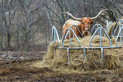 Photograph - Texas Longhorn by Jim West
