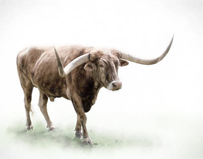 Photograph - Texas Longhorn On White by David and Carol Kelly