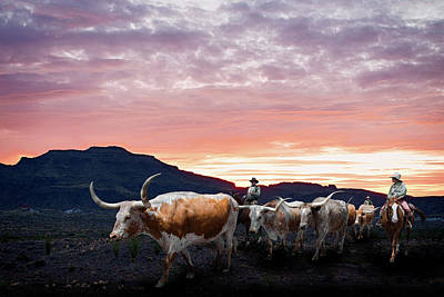 Photograph - Texas Longhorn Orange Morning by Rospotte Photography
