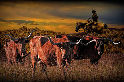 Photograph - Texas Longhorn Steers And Cowboy At Sunset by Randall Nyhof