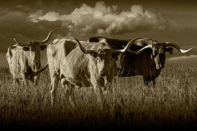 Photograph - Texas Longhorn Steers Under A Cloudy Sky In Sepia Tone by Randall Nyhof