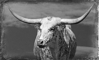 Photograph - Texas Longhorn by Ed Churchill
