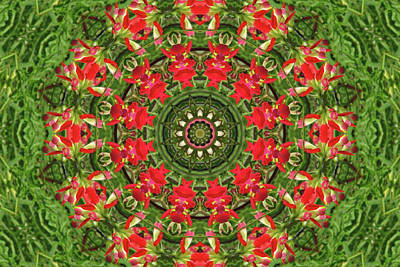 Photograph - Texas Paintbrush Kaleidoscope by Robyn Stacey