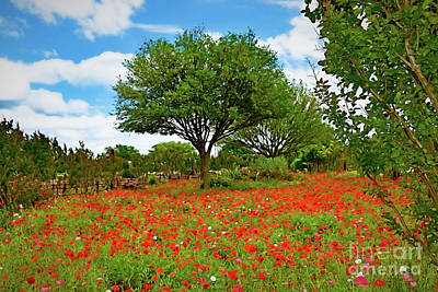 Photograph - Texas Poppy Field 159 by Ray Shrewsberry