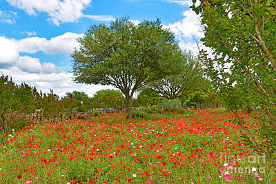 Photograph - Texas Poppy Field  by Ray Shrewsberry