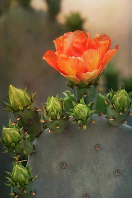 Photograph - Texas Prickly Pear  by Saija Lehtonen